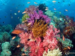LifeA Garden of ColorTropical Fish Underwater Sea Life Wallpaper 669