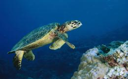 Turtle Underwater Life Images High Definition Wallpaper on Pinterest 304