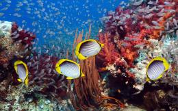 wallpapers of Marine Life , find out six beautiful pictures of Marine 1019