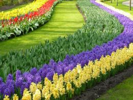 Exciting Color: Colorful Keukenhof Tulip Gardens:10 Colorful places to 1042
