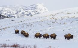 Yellowstone in Winter for Women jpg 1616