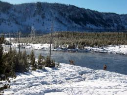 PanoramioPhoto of Yellowstone in Winter 1646