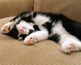 playing on sofa wallpaper in Animals wallpapers with all resolutions 620
