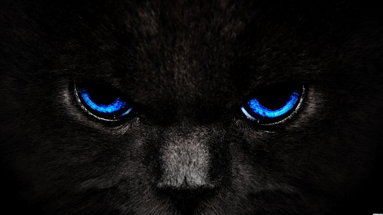 Cat Eyes Wallpapers, Blue Cat Eyes, Yellow Cat Eyes, Green & Red Cats 1267