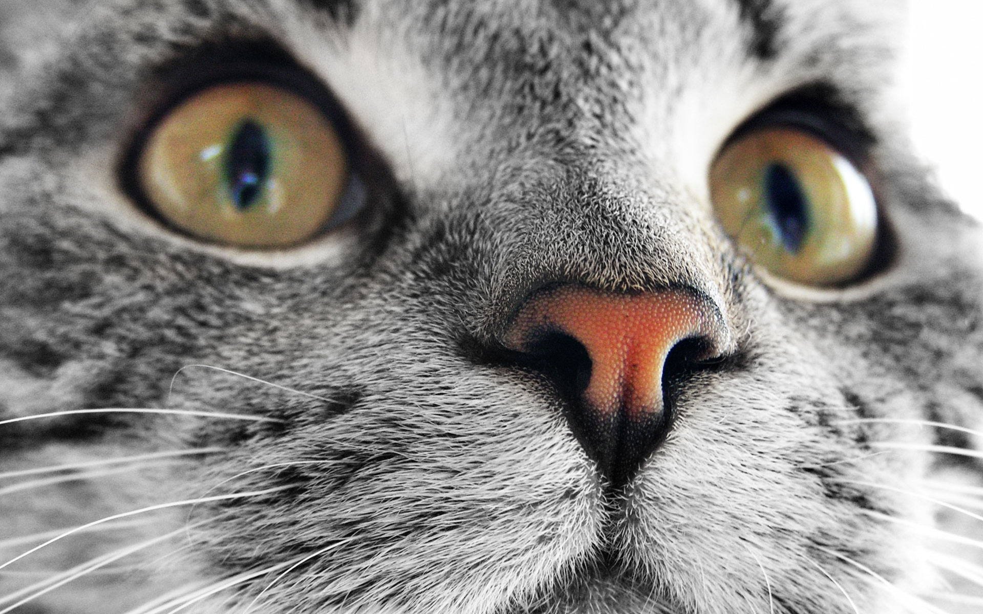 attractive, nature, wallpapers, cat, face, animals, pictures 1386