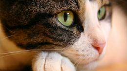 Cat Eyes Wallpapers | HD Wallpapers 1999
