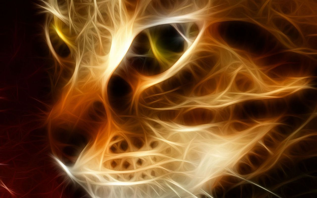 Beautiful Fire Cat HD Wallpaper | Animals Wallpapers 874