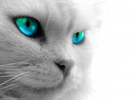 Cat Eyes Wallpapers, Blue Cat Eyes, Yellow Cat Eyes, Green & Red Cats 1534