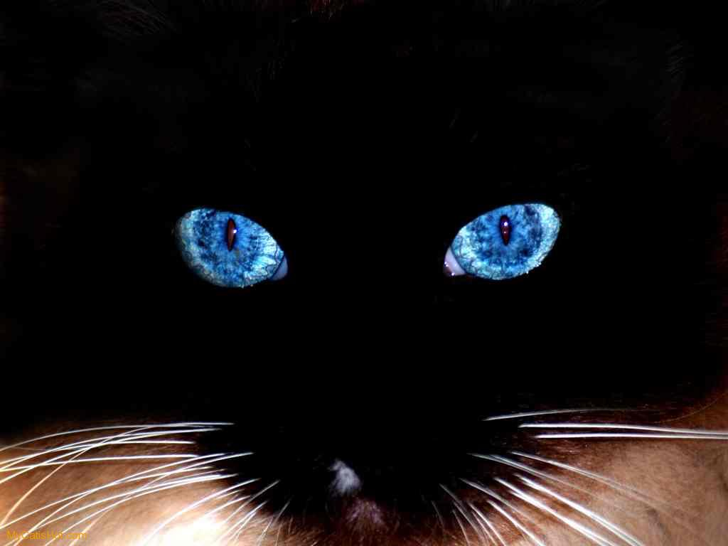 Cutest Cat Around World: cat eyes 734