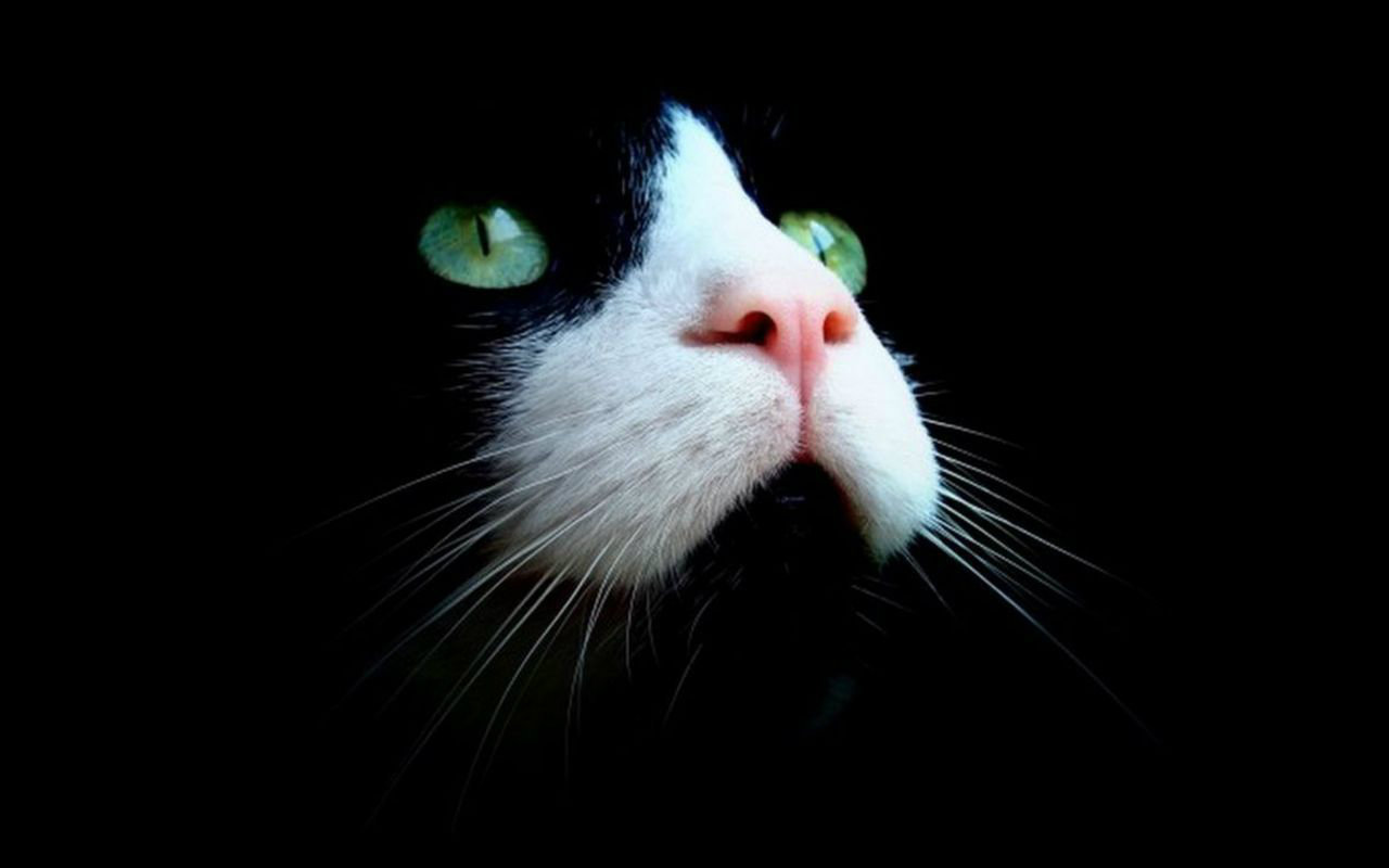 Cats With Green Eyes Wallpapers & Beautiful HD Pictures | Most HD 1302