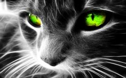 Cat Eyes Wallpapers, Blue Cat Eyes, Yellow Cat Eyes, Green & Red Cats 1750