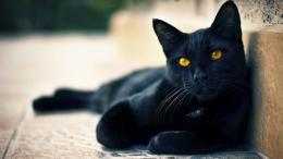 Beautiful Cat Wallpapers HD Pictures | One HD Wallpaper Pictures 1047