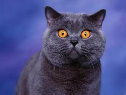 tag yellow eyes cat wallpapers images paos pictures and backgrounds 700