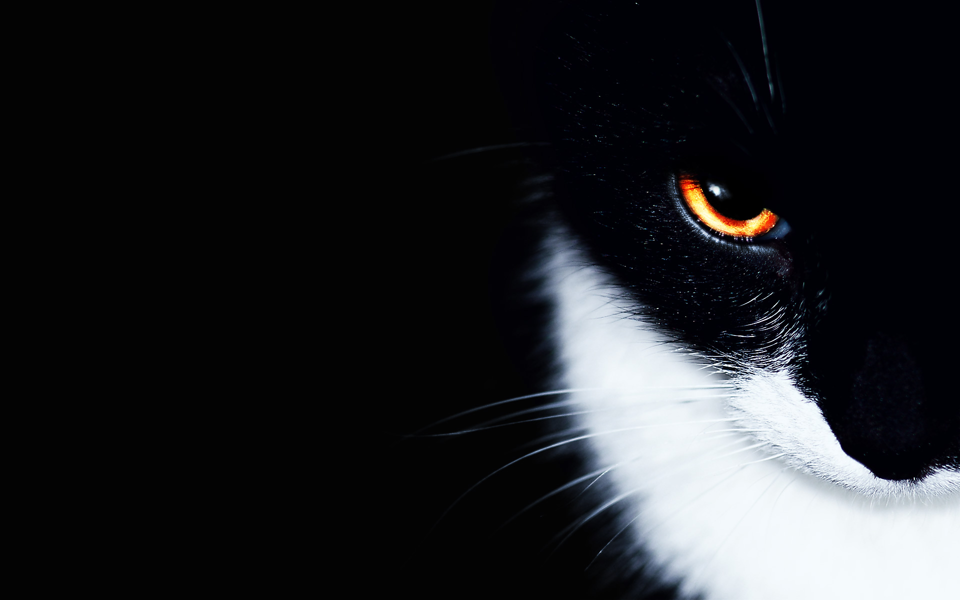 Cats Animals Wallpaper 1920x1200 Cats, Animals, Orange, Eyes 1846