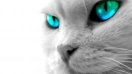 cat blue eyes high definition desktop wallpaper download cat blue eyes 379