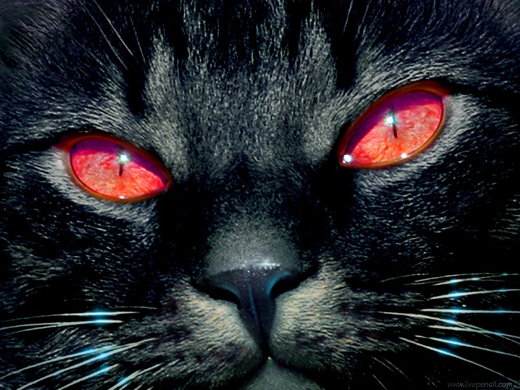 Cat Eyes Wallpapers, Blue Cat Eyes, Yellow Cat Eyes, Green & Red Cats 377
