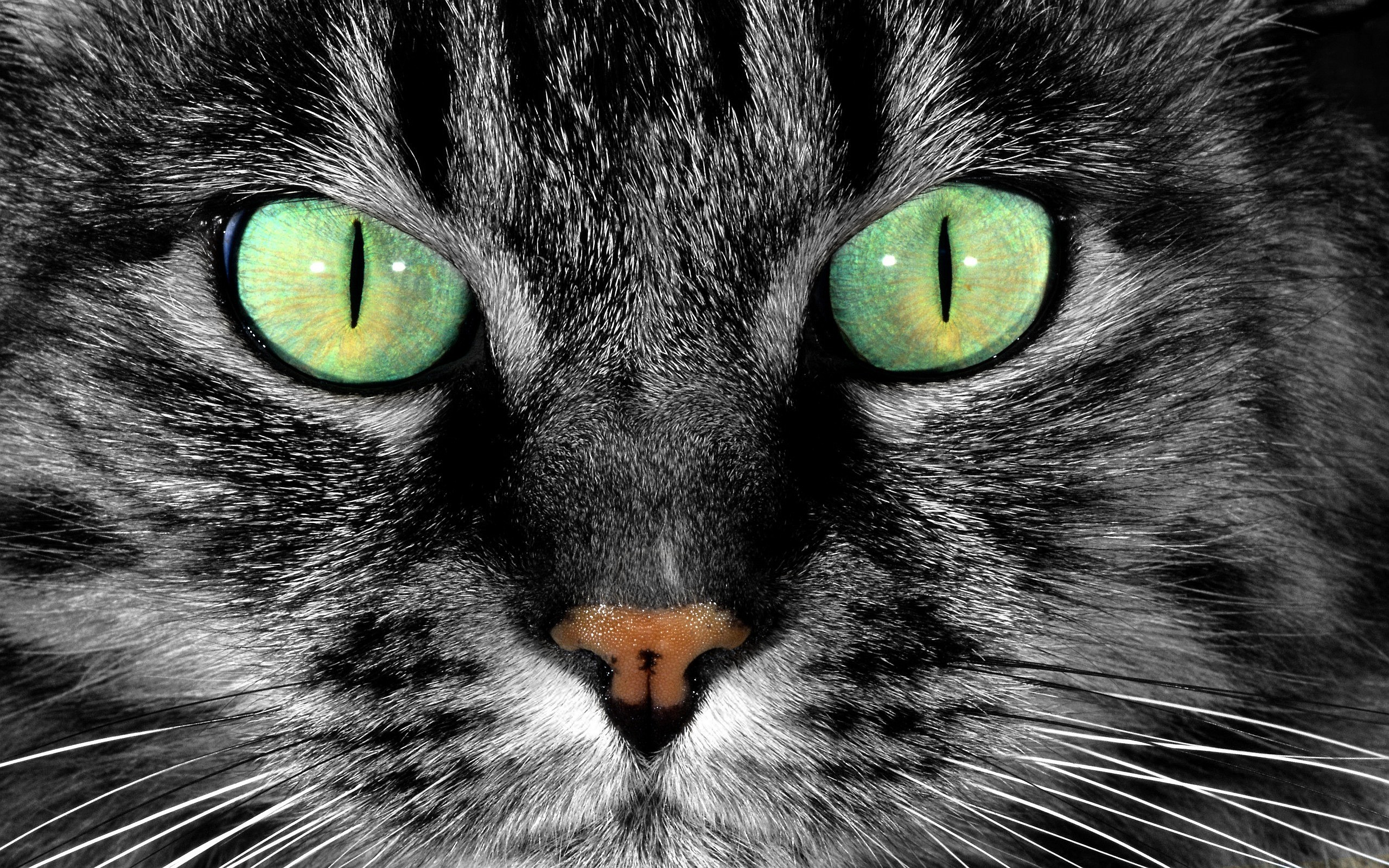 Cat green Eyes Wallpapers Pictures Photos Images 1386