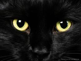 Cat Eyes Wallpapers, Blue Cat Eyes, Yellow Cat Eyes, Green & Red Cats 542