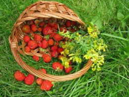 Basket of Strawberries 1607