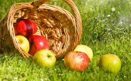 Basket of apples wallpaper #27291 1938