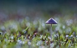 Mushrooms HD Wallpapers Beautiful 1938