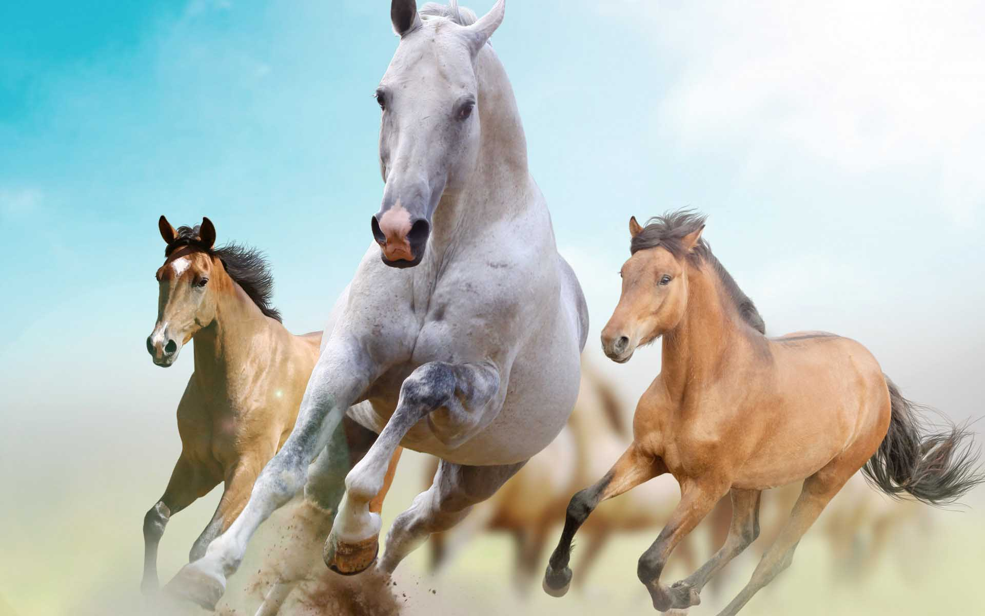 wild horses racing wallpaper - photo #2