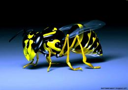 Bee Famous Macro Nature Photography Wallpaper   Best HD Wallpapers 152