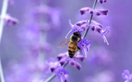 Insect bee flower macro Animals 1280x800 221