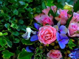 Download Birthday Roses wallpaper in Flowersplants wallpapers with 754