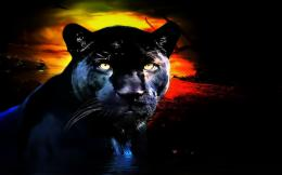 AnimalBlack Panther Animal Black Cat Panther Wallpaper 221