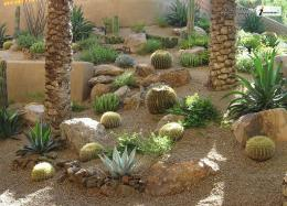 arizona cactus garden az cacti nature desert hd wallpaper 973