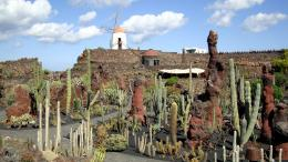 Free Manrique cactus garden on Lanzarote 2 desktop wallpaper | Scenic 554