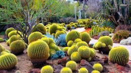 Cactus garden wallpaperNature wallpapers#19080 1129