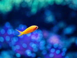 Macro Small Yellow Fish In Aquarium Hd Wallpaper | Wallpaper List 1572