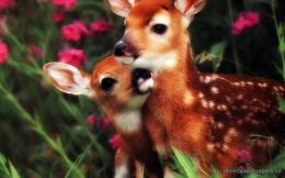 White tailed deer mom and child WallpaperDesktop Wallpapers Free 1632