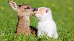 Kitten and baby deer wallpapers and imageswallpapers, pictures 875