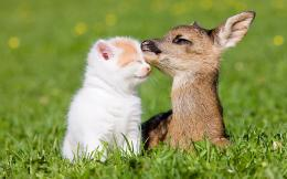 Cat Fawn Friendship Wallpapers Pictures Photos Images 1753
