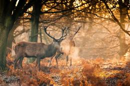 Deer antlers autumn forest wallpaper | 2048x1360 | 485744 1121