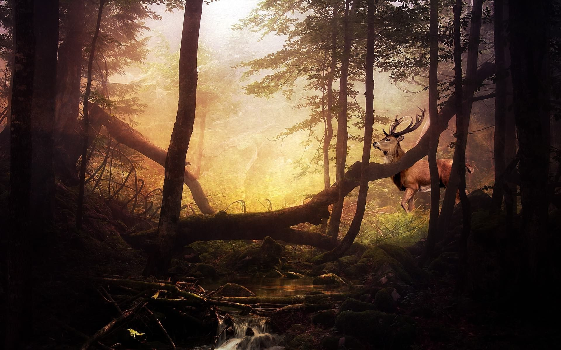 Deer in the forest wallpaper 1045