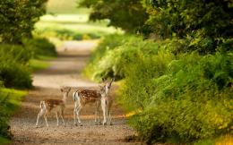Wallpaper of deers in the wild on a road near the forest | HD deer 1325