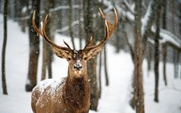 deer landscapes nature trees forest woods winter snow flakes snowing 177