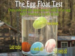 Chick®: Egg Float TestIndicates Approximate Age, NOT Egg Safety 400