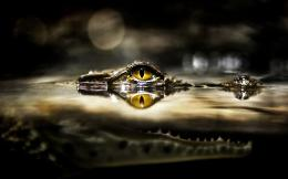 Crocodile eye Wallpapers Pictures Photos Images 309