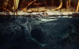 Crocodile Eye Ipad Wallpapers Pictures to pin on Pinterest 530