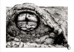 eye of the crocodile by ebasqan on DeviantArt 765