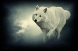 Fantasy Wolf Black Pack The Wolves Quotes hd wallpaper #1658288 1783