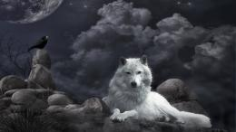 Beautiful Wallpapers: Beautiful Wolf Wallpapers 1597