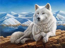 Alone Abstract Animal Painting Fantasy Wolf hd wallpaper #1377981 833