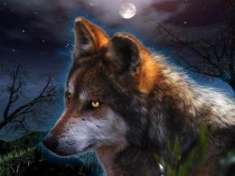 fantasy wolf desktop wallpaper download fantasy wolf wallpaper in hd 1410