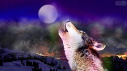 Fantasy Wolf Wallpaper 205